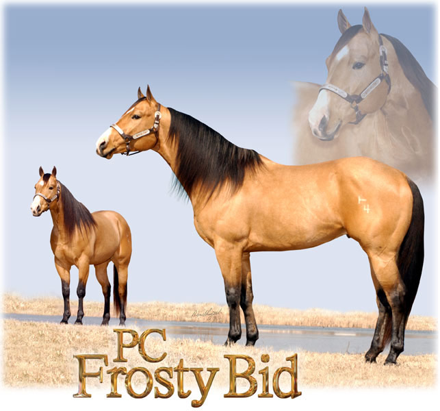 Billy Etbauer Performance Horses | PC Frosty Bid