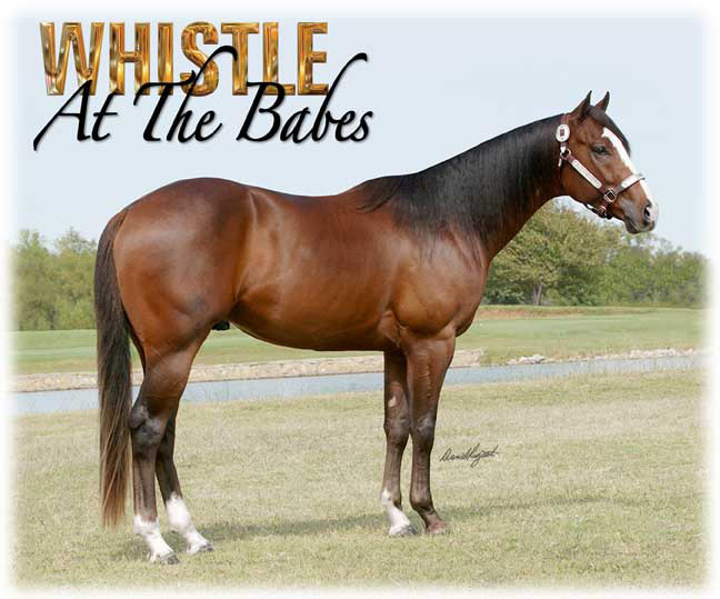 Billy Etbauer Performance Horses   Whistle At The Babes